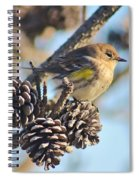 Three Pine Cones And A Little Bird Spiral Notebook