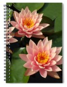 Three Pink Water Lilies Spiral Notebook