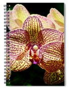 Three Plus Happiness Spiral Notebook