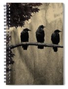 Three Ravens Branch Out Spiral Notebook