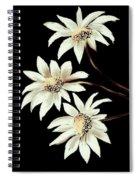Three Spring Daisies Spiral Notebook