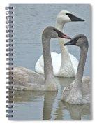 Three Swans Swimming Spiral Notebook