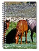 Three Together Spiral Notebook