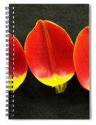 Three Tulip Petals Spiral Notebook