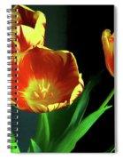 Three Tulips Photo Art Spiral Notebook