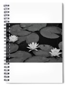 Three Water Lilies  Spiral Notebook
