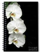 Three White Orchids Spiral Notebook