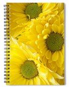 Three Yellow Daisies  Spiral Notebook