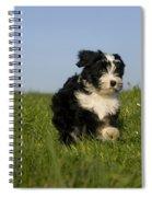 Tibetan Terrier Puppy Spiral Notebook