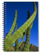 Tickle Me Spiral Notebook