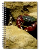 Tide Pool Crab 1 Spiral Notebook