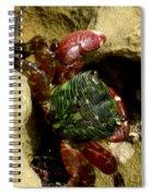 Tide Pool Crab 2 Spiral Notebook