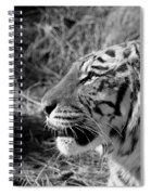 Tiger 2 Bw Spiral Notebook