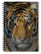Tiger 5 Posterized Spiral Notebook