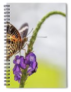 Tiger Butterfly Perched On A Flower Spiral Notebook