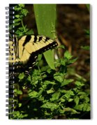 Tiger Butterfly Posing Spiral Notebook