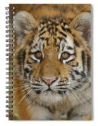 Tiger Cub Spiral Notebook