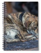 Tiger Dog And The Buskers Spiral Notebook