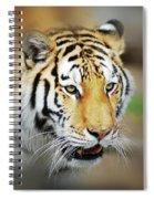 Tiger Eyes Spiral Notebook