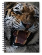 Tiger Faces 2 Spiral Notebook