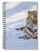 Tiger In The Snow Spiral Notebook