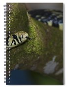 Tiger In The Tree.. Spiral Notebook
