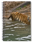 Tiger In The Water Spiral Notebook