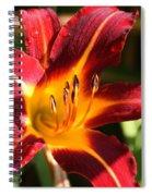 Tiger Lily0064 Spiral Notebook