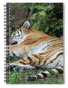 Tiger- Lincoln Park Zoo Spiral Notebook