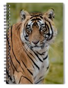 Tiger Look Spiral Notebook