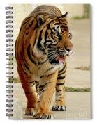 Tiger Pacing Spiral Notebook