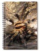Tiger Spider  Spiral Notebook