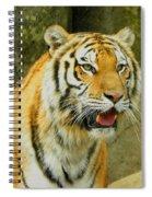 Tiger Stare Spiral Notebook