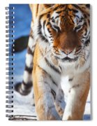 Tiger Strut Spiral Notebook