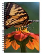 Tiger Swallowtail - 3 Spiral Notebook