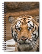 Tiger Wading Stream Spiral Notebook
