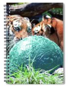 Tigers Playing Spiral Notebook