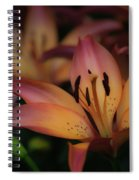 Tigress Spiral Notebook