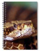Timber Rattler Coil Spiral Notebook