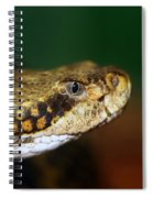 Timber Rattler Head On Spiral Notebook