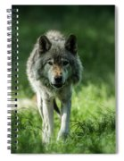 Timber Wolf Picture - Tw69 Spiral Notebook
