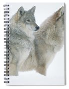 Timber Wolf Portrait Of Pair Sitting Spiral Notebook