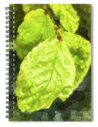 Time Travel Summer Leaves Spiral Notebook
