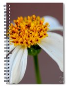 Tiny Ants In Tiny Flower Spiral Notebook