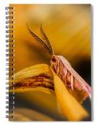 Tiny Butterfly Spiral Notebook