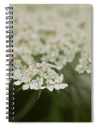 Tiny Cluster Of Queen Anne's Lace Spiral Notebook