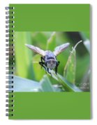 Tiny Fly Spiral Notebook