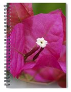 Tiny Little White Flower Spiral Notebook
