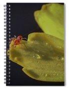 Tiny Spider On Petal Spiral Notebook