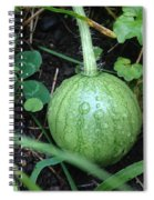 Tiny Watermelon Spiral Notebook